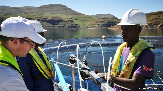 Lesotho now produces twice as much trout as neighbouring South Africa