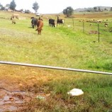 Students bear brunt of pasture feud