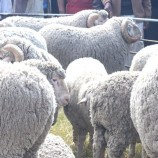 'Wool, mohair scouring plant can create jobs'