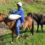 NUL, NGO collaborate on horses welfare